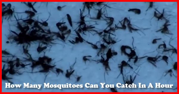 Mosquito Catcher