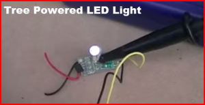 tree powered LED light