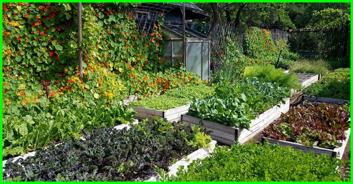 Home grown the urban homestead revolution gotta go do it yourself this is an example of what is possible on your average sized urban lot this 110 of an acre of permaculture space supplements the food for a family of 4 solutioingenieria Choice Image